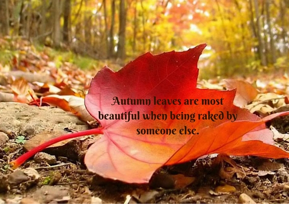 Autumn leaves are most beautiful when being raked by someone else.